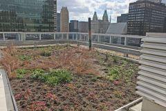 1H1H6028Roof garden E&South full.jpg